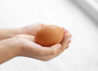 beskyt ægget