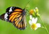 Lav en sommerfuglehave