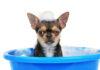 Lav jeres egen hundeshampoo